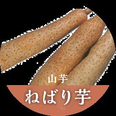 おすすめ商品 ねばり芋(山芋)
