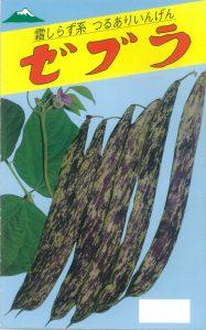 ゼブラ菜豆