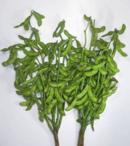 中生茶豆の莢